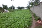Abidjan COCODY RIVIERA4 EN BORDURE D'EAU vente terrain 2664m