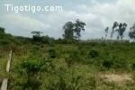 Abidjan  Terrain 2 Hectare En Vente À Cocody M'badon