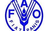 offre d'emploi FAO