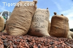 Vente de 4000 tonnes de Cacao usiné